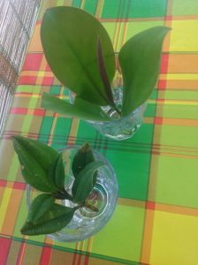 kwiaty , krzewy tropikalne