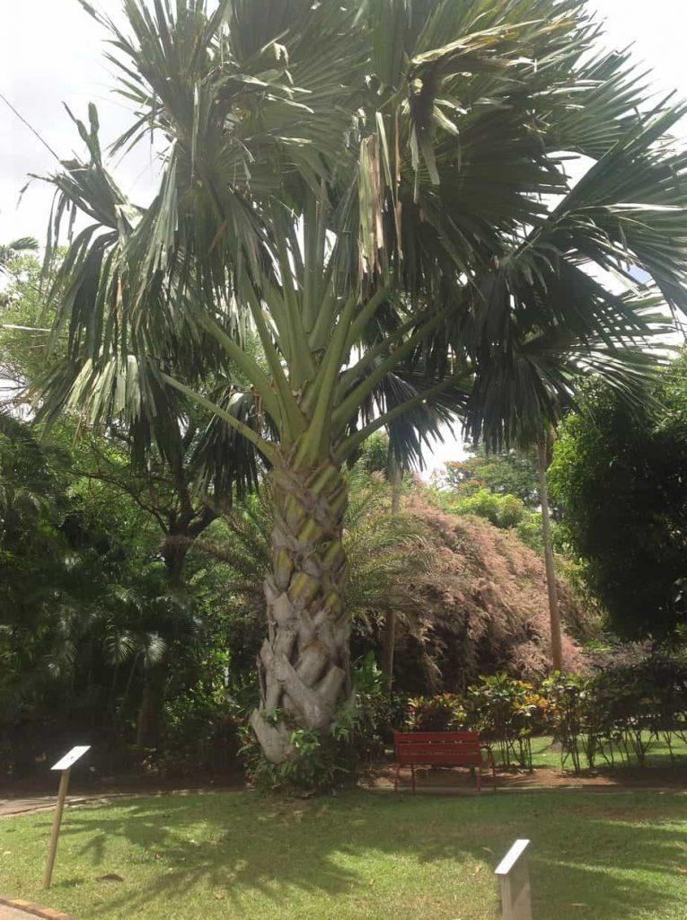 roślinność Karaibów