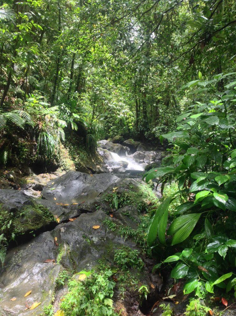 bassin paradise wodospad