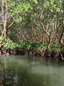 mongrove