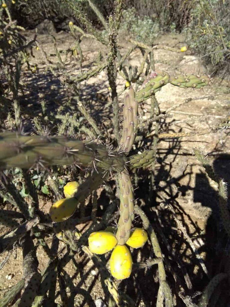 cactus_arizona