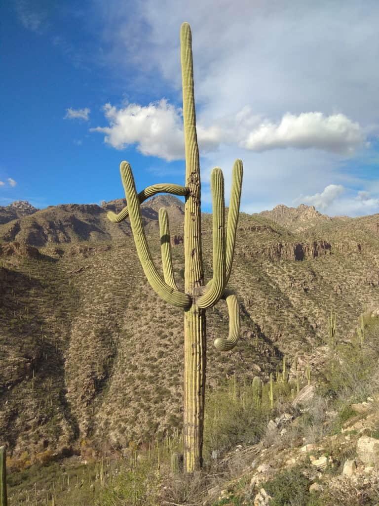 sabino_canyon_trail